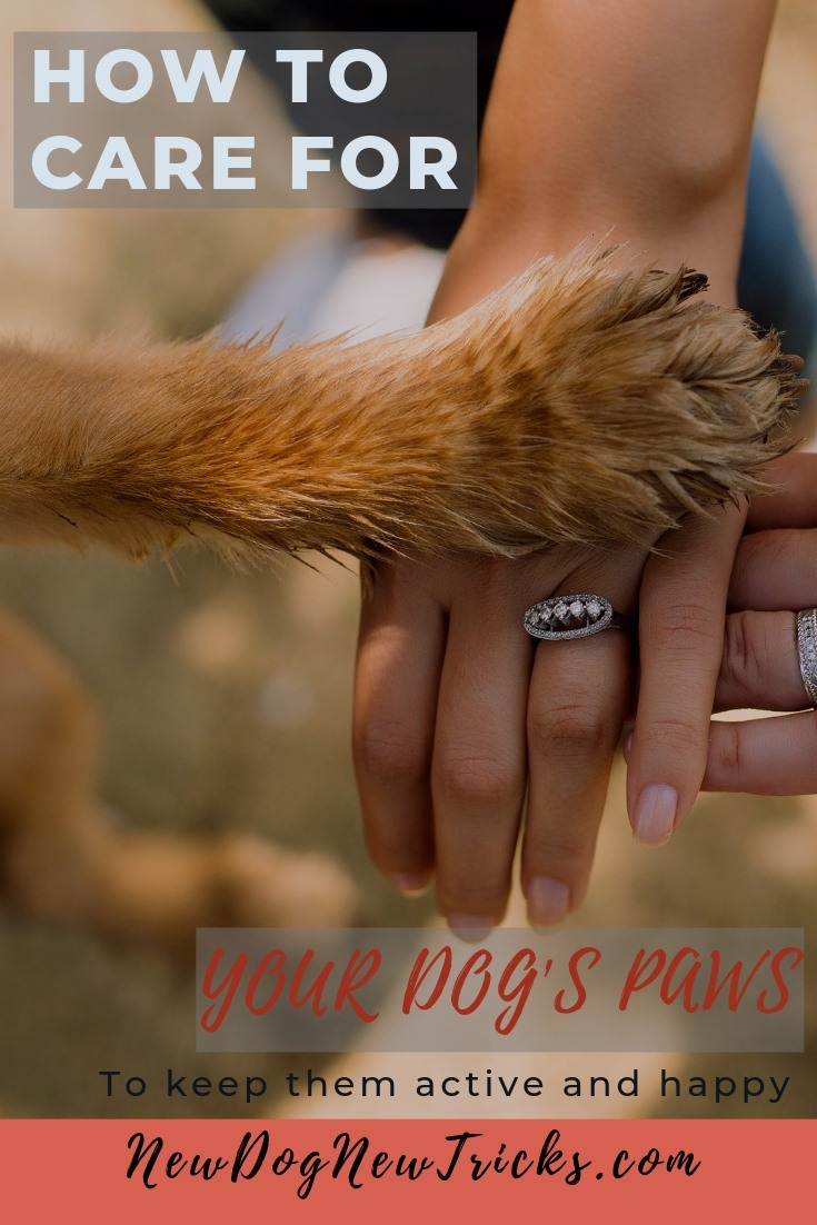How to Care for Dog's Paws (1)