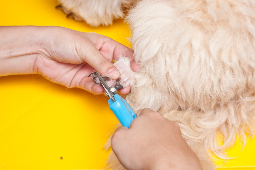 Cut Your Dog's Nails - nails photo 13