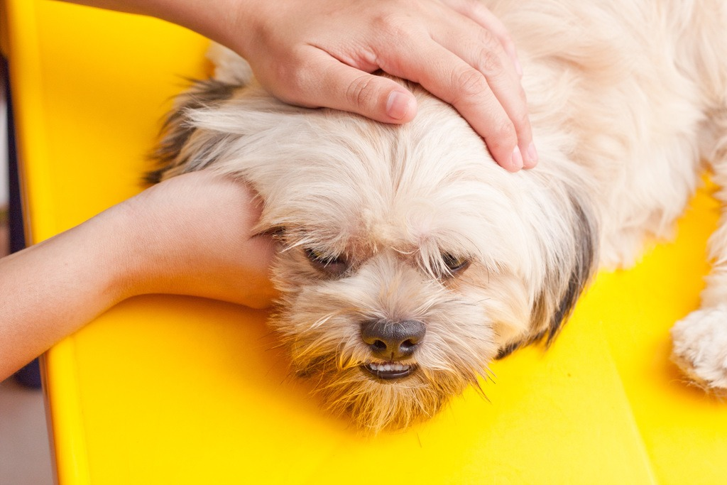 Position Your Dog - nails photo 2
