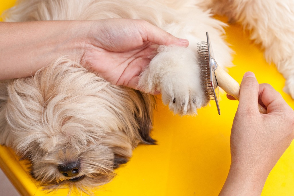 brush your dogs hair - nails photo 4