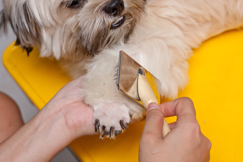 Shave Your Dog's Hair - nails photo 8